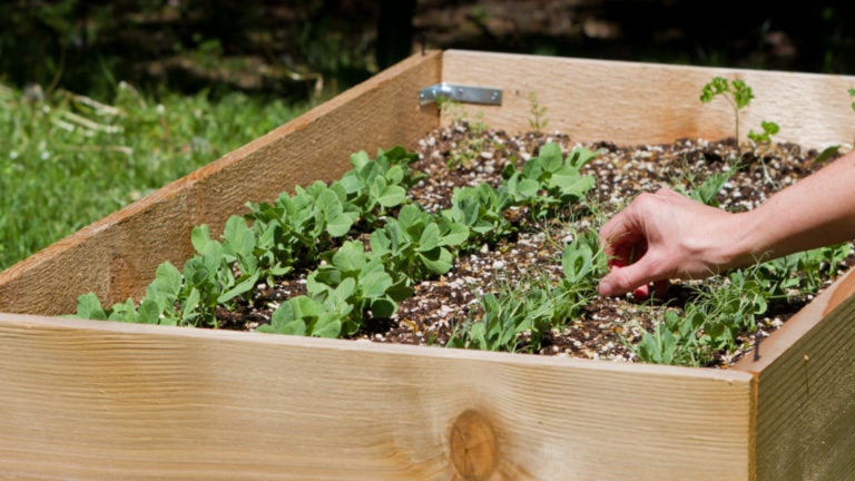 Ask the Gardener: Get your raised bed ready for next year