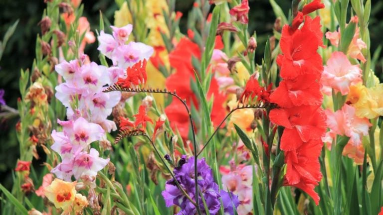 Ask the Gardener: Advice on bulbs, fertilizer, and composting