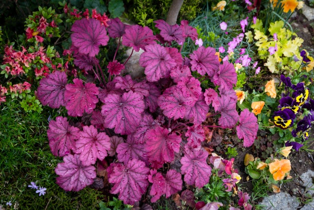 Ask the Gardener: Plants that work in shady and wet window boxes