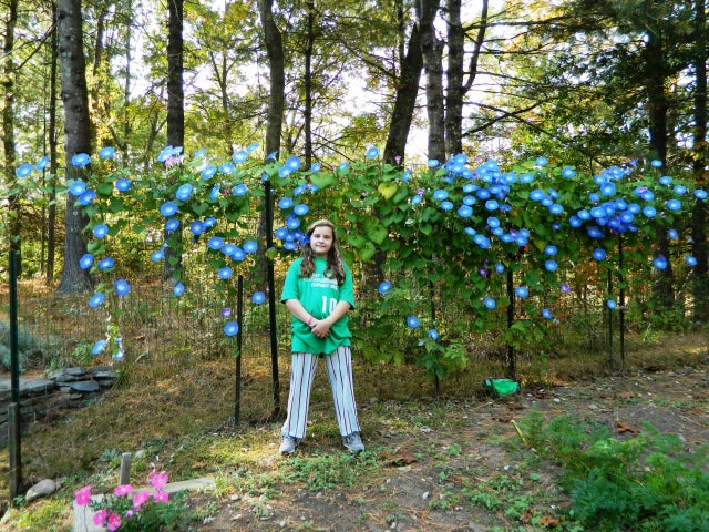 Ask the Gardener: Protecting trees while putting in a new driveway